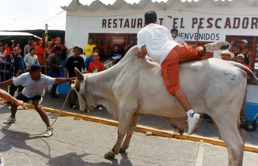 In Tlacotalpan,Veracruz People run from a bull during the annual Candlemas celebrations in Tlacotalpan, a pack of bull is let loose to rampage through the streets for hours as crowds taunt them as part of the celebration.