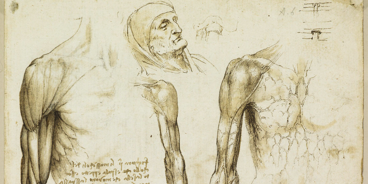 Recto: The muscles and veins of the arm and torso. Verso: The mu