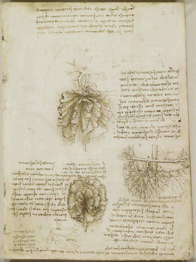 Leonardo Da Vinci described the mesentery in one of his 16th-century medical texts.