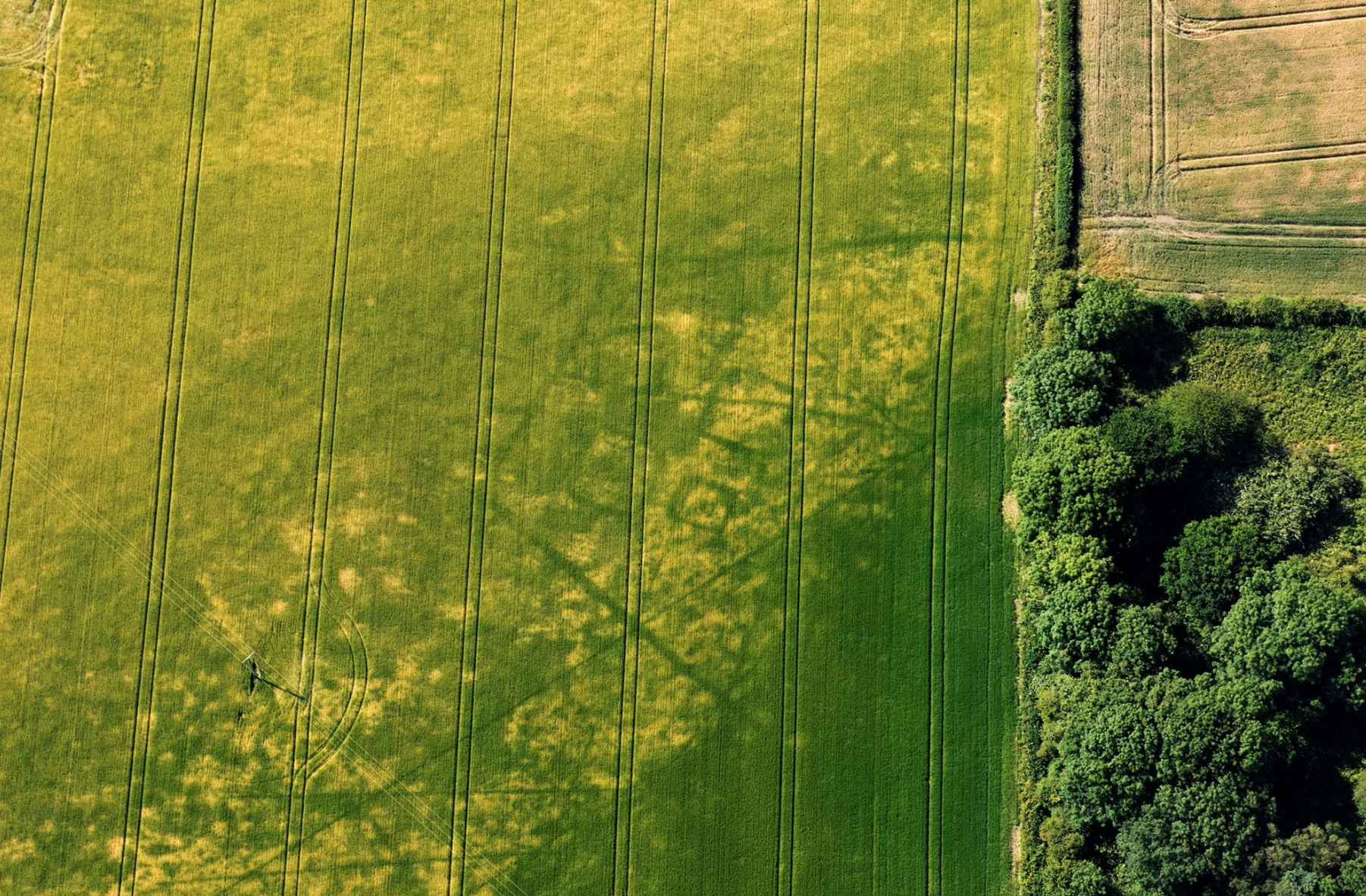 CROP MARKS; BURIAL GROUND; YORKSHIRE; AERIAL ARCHAEOLOGY